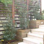 Garten für ein Stadthaus, Sichtschutz